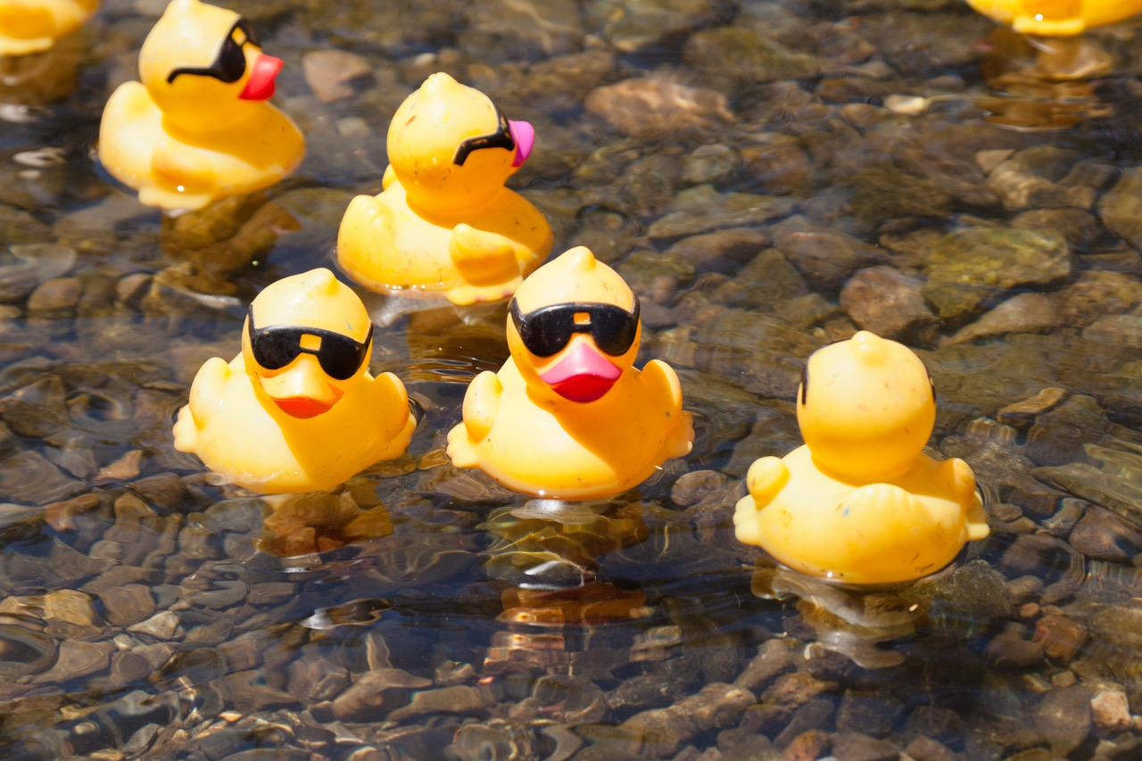 The Great Rotary Duck Race